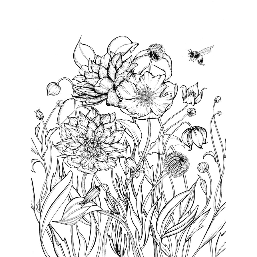 Pictures to colour in for adults printable