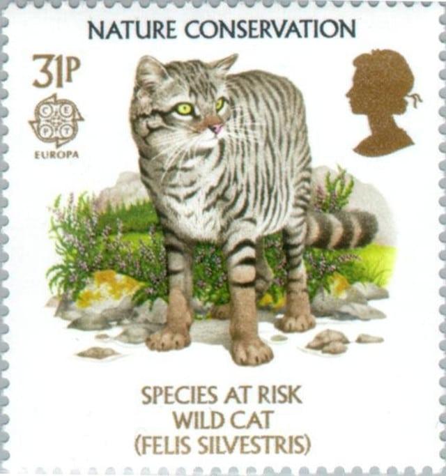UK wild cat stamp