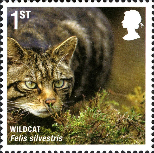 UK wildcat stamp